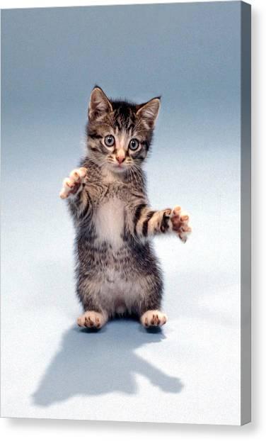 Kitten Hug Canvas Print
