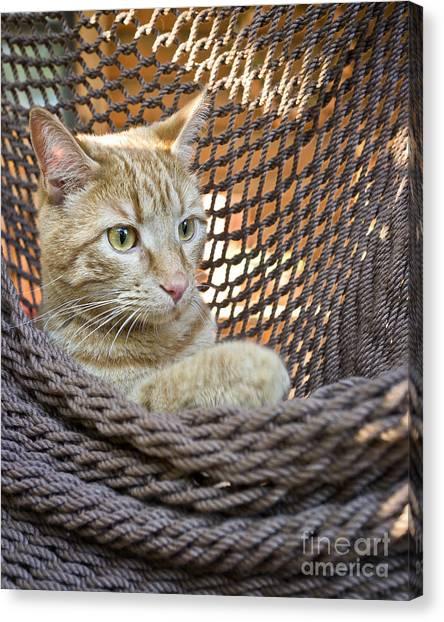 Kitten In A  Hammock Canvas Print
