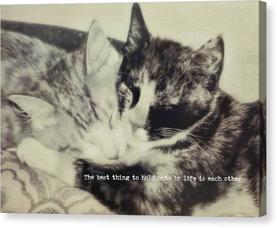 Kitten Nap Quote Canvas Print by JAMART Photography