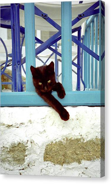 Kitten With Blue Rail Canvas Print