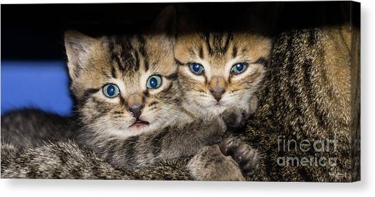 Kittens In The Shadow Canvas Print