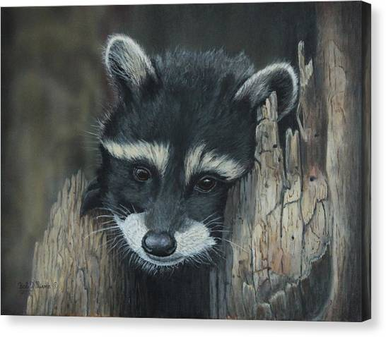 Kit...the Baby Raccoon Canvas Print