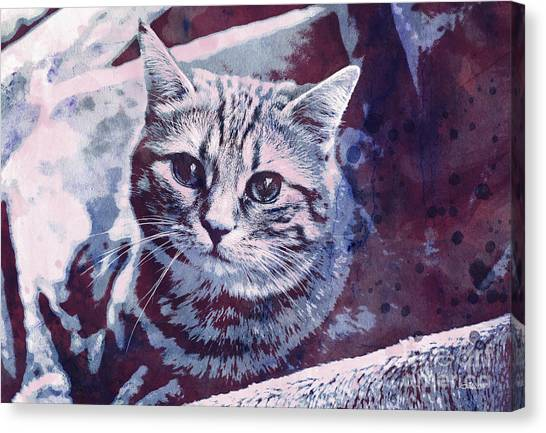 Creative Manipulation Canvas Print - Kitty Cat by Jutta Maria Pusl