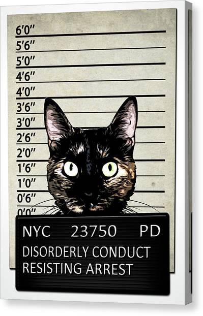 Pets Canvas Print - Kitty Mugshot by Nicklas Gustafsson