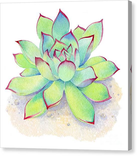 Cactus Canvas Print - Kiwi Aeonium by Laura Nikiel