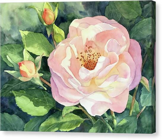 Knockout Rose And Buds Canvas Print