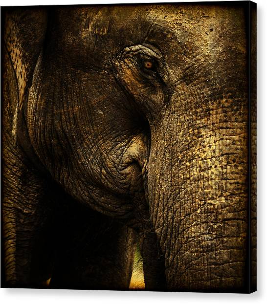 Knowing Canvas Print