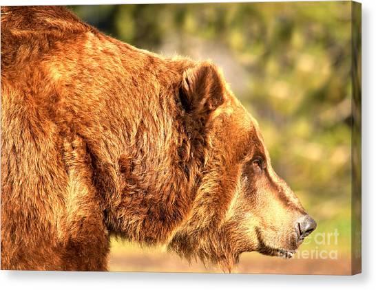 Bear Claws Canvas Print - Kodiak Grizzly Portrait by Adam Jewell