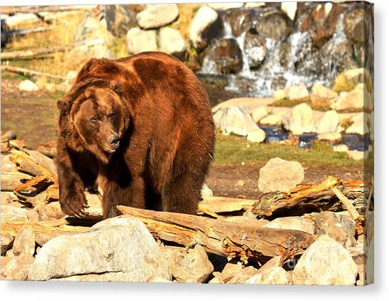 Bear Claws Canvas Print - Kodiak In The Rubble by Adam Jewell