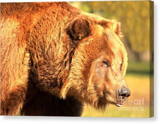 Bear Claws Canvas Print - Kodiak Snout by Adam Jewell