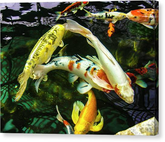 Canvas Print featuring the photograph Koi 2018 2 by Phyllis Spoor