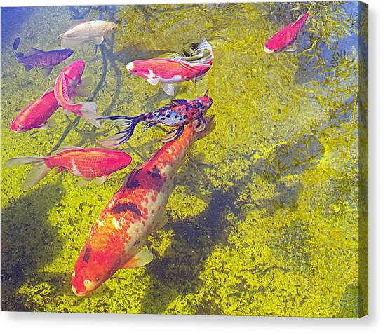 Koi And Friends Canvas Print