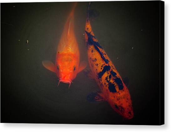 Koi Canvas Print by Christina Durity