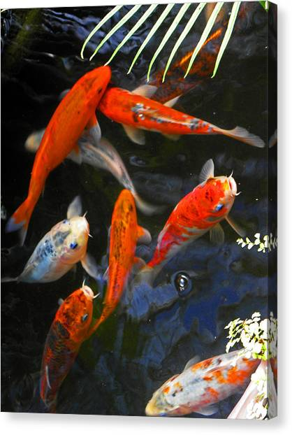 Koi Fish II Canvas Print by Elizabeth Hoskinson