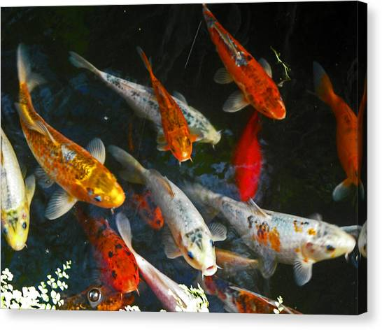 Koi Fish IIi Canvas Print by Elizabeth Hoskinson