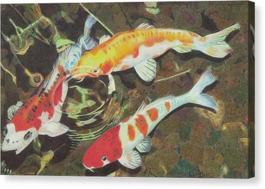Koi Pond Canvas Print - koi by Janine DeFily