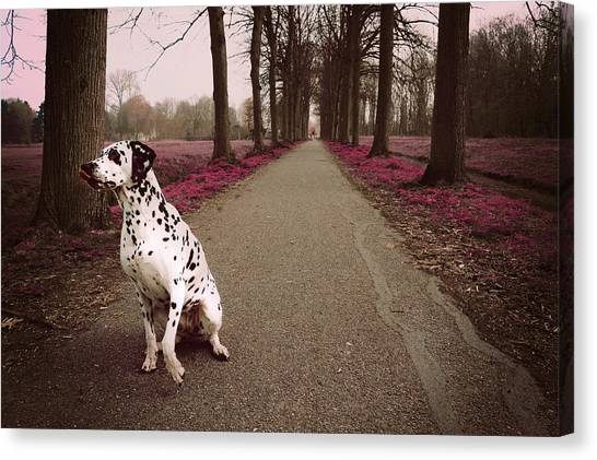 Dalmations Canvas Print - Kokkie On The Autumn Alley Of Rhoon by Jenny Rainbow