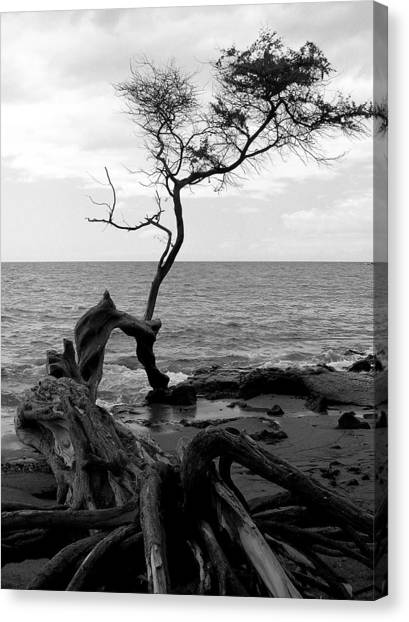Kona Coast Tree Canvas Print
