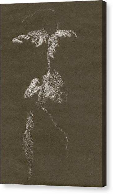 Kroki 1997, Pre.3 Vit Krita, Figure Drawing White Chalk Canvas Print