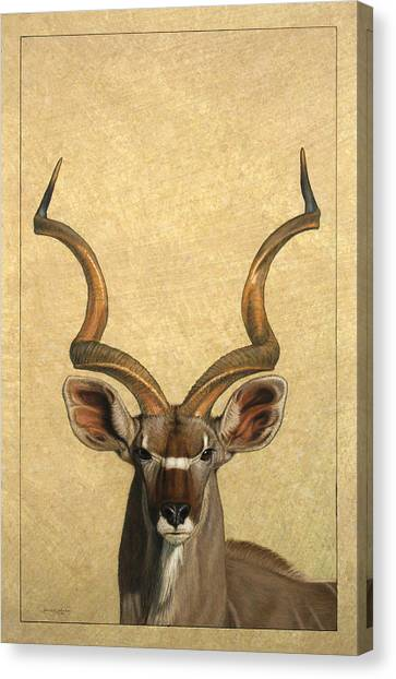 Brown Canvas Print - Kudu by James W Johnson
