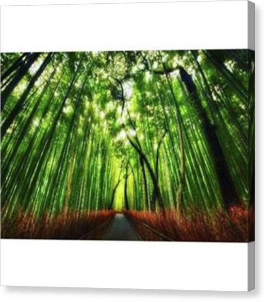 Sagano Bamboo Forest Canvas Print - Kyoto City Sagano The Road Of Bamboo by Tetsuya Saito