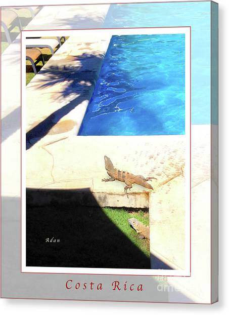 la Casita Playa Hermosa Puntarenas Costa Rica - Iguanas Poolside Greeting Card Poster Canvas Print