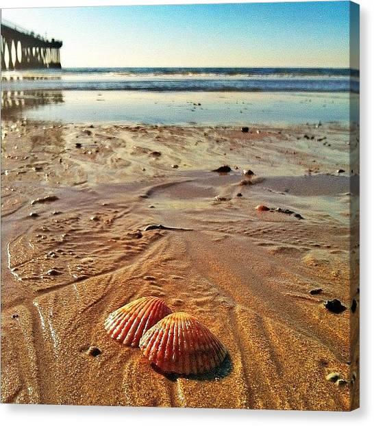 Seashells Canvas Print - La Playa-  #sea #seashell #ocean #water by Tyler Rice