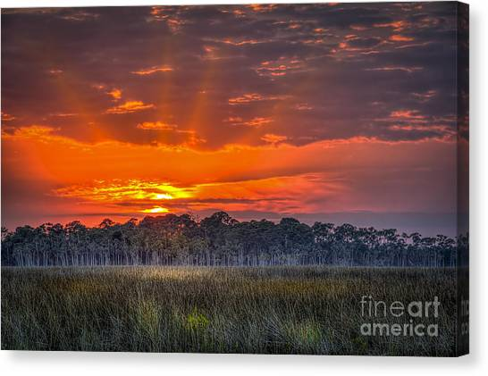 Marsh Grass Canvas Print - Labor Of Love by Marvin Spates