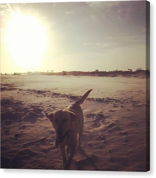 Portal Canvas Print - #labrador #beach #dog #summer #atlantida by Fernando Portal