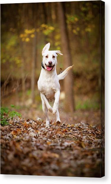 Labrador Frolics In Woodlands Canvas Print