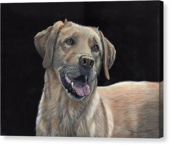 Labrador Portrait Canvas Print