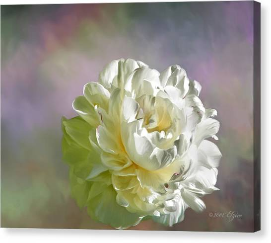 Lacy Canvas Print by Elzire S