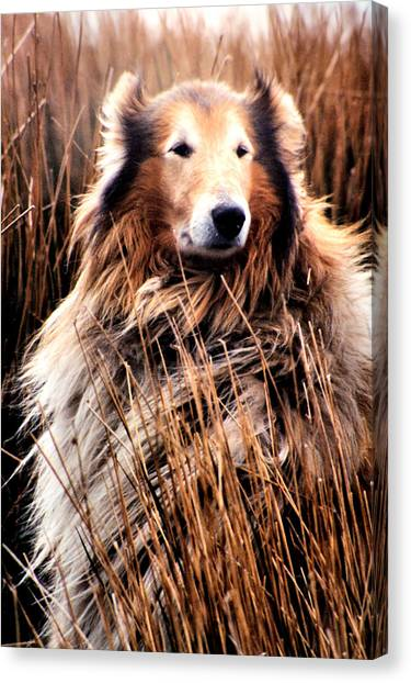 Laddie In Charge Canvas Print by Ellen Lerner ODonnell