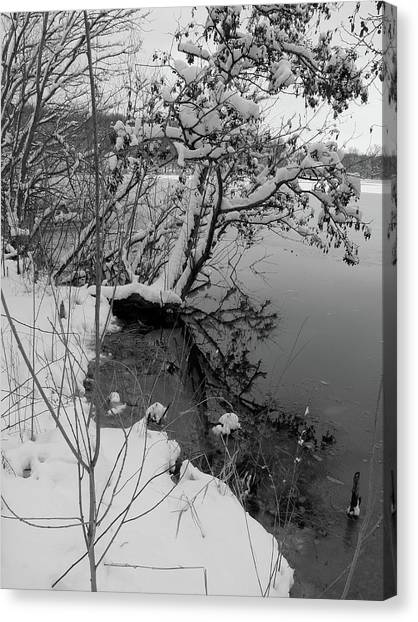 Laden With Winter Canvas Print