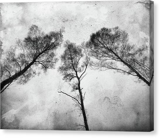 Ladies Of The Woods Canvas Print
