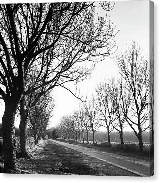 Landscapes Canvas Print - Lady Anne's Drive, Holkham by John Edwards