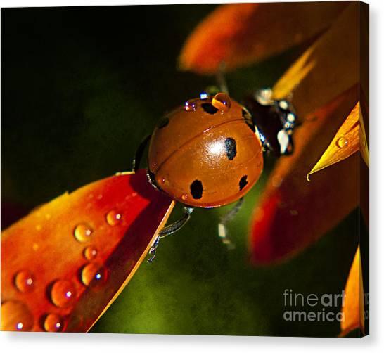Lady Bug Bridge Canvas Print