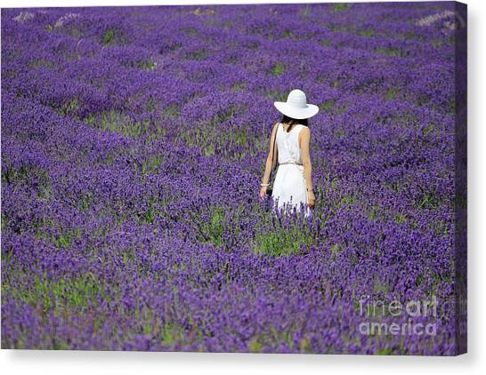 Lady In Lavender Field Canvas Print