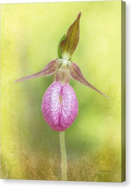 Lady Slipper Orchid Fantasy Canvas Print