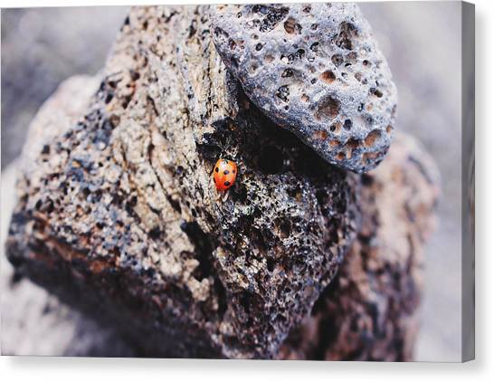 Fleas Canvas Print - Ladybird 	 by Martina Uras