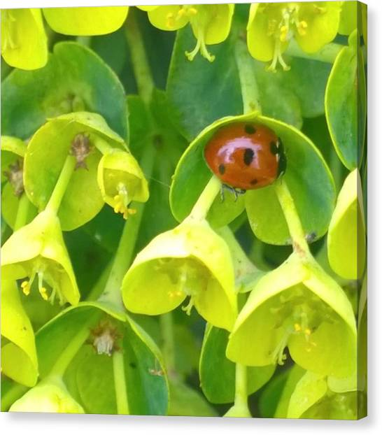 Green Canvas Print - #ladybug Found Some Shelter From The by Shari Warren