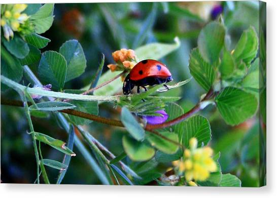 Ladybug Haven Canvas Print