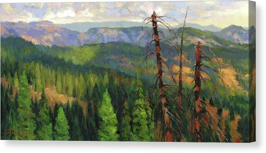 Fir Trees Canvas Print - Ladycamp by Steve Henderson