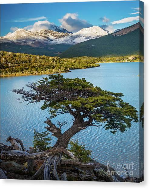Andes Mountains Canvas Print - Laguna Capri Tree by Inge Johnsson