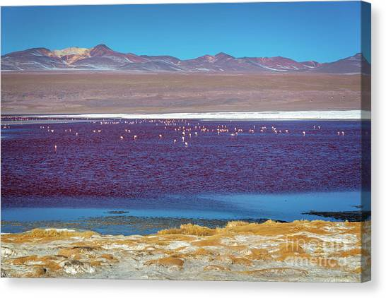 Andes Mountains Canvas Print - Laguna Colorada, Bolivia by Delphimages Photo Creations