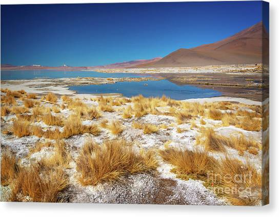 Andes Mountains Canvas Print - Laguna Polques, Sud Lipez Bolivia  by Delphimages Photo Creations