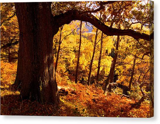 Lake District - Fall Colors Near Aira Force Canvas Print by Dave Lawrance