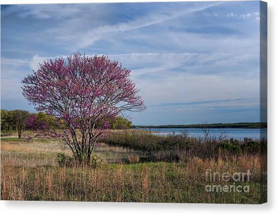 Lake Murray Redbud Tree Canvas Print