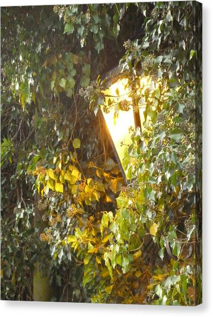 Lamplight Canvas Print by Jane Stanley