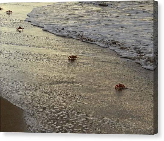 Exploramum Canvas Print - Lamu Island - Crabs Playing At Sunset 1 by Exploramum Exploramum